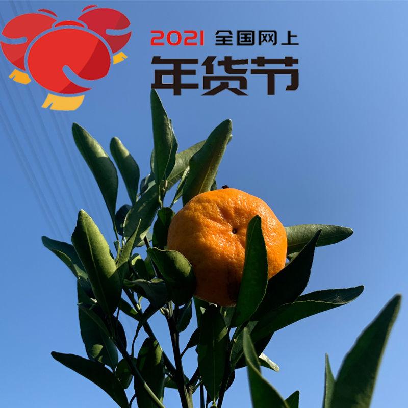 (损坏包赔)湘西椪柑新鲜当季水果椪柑丑橘蜜桔5斤装包邮