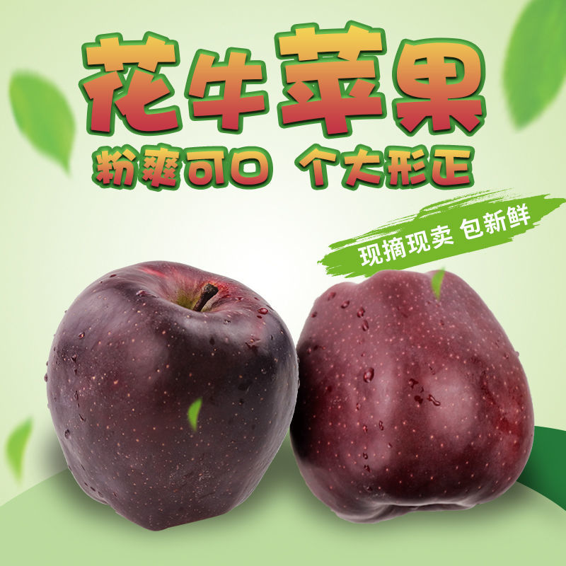 天水秦安花牛苹果10斤顺丰包邮新鲜蛇果刮泥苹果宝宝辅食