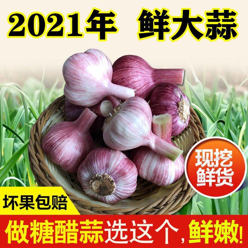 紫皮大蒜头新鲜大蒜云南蔬菜糖醋蒜湿蒜