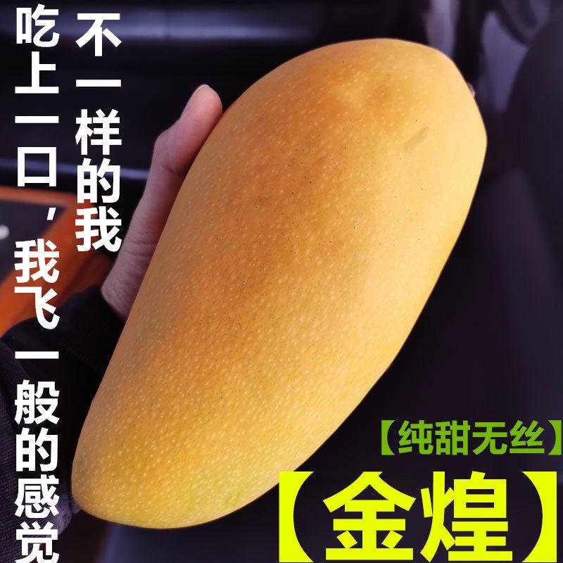 海南金煌芒果水仙芒甜心芒当季新鲜热带水果整箱批发批发5斤10斤