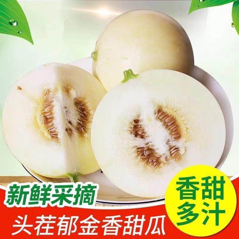 【顺丰现货】现摘头茬郁金香小甜瓜3斤装单果250克以上香瓜蜜瓜