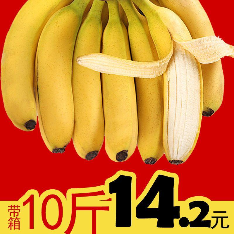 【自然熟香蕉】新鲜香蕉应季水果云南特产小米蕉芝麻批发特价包邮