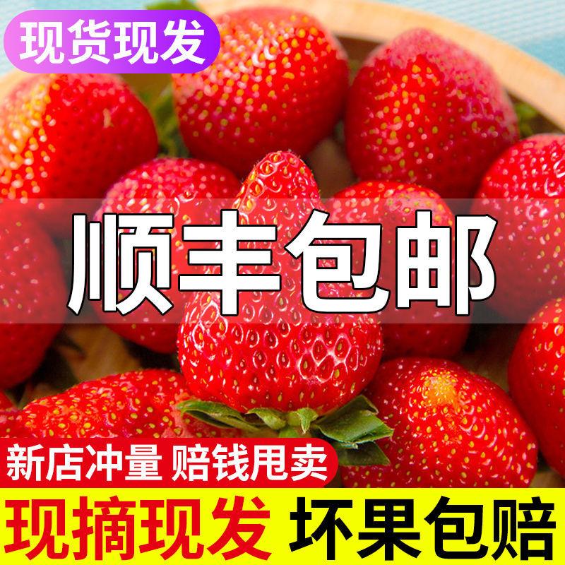 牛奶草莓新鲜水果孕妇奶油草莓现摘现发草莓产地直发非丹东99草莓