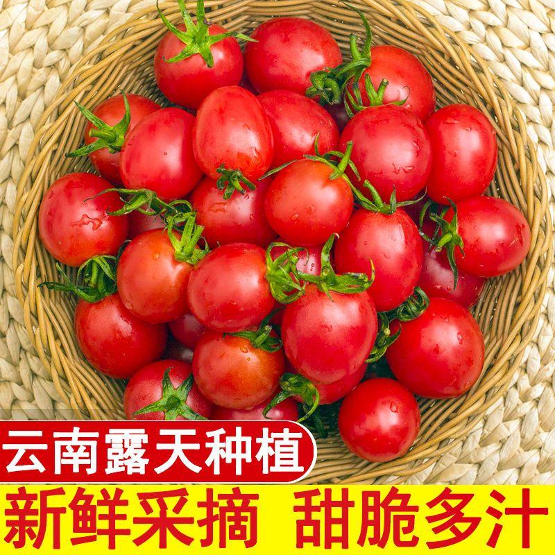 云南现摘圣女果新鲜小番茄樱桃小西红柿当季水果整箱批发非千禧果