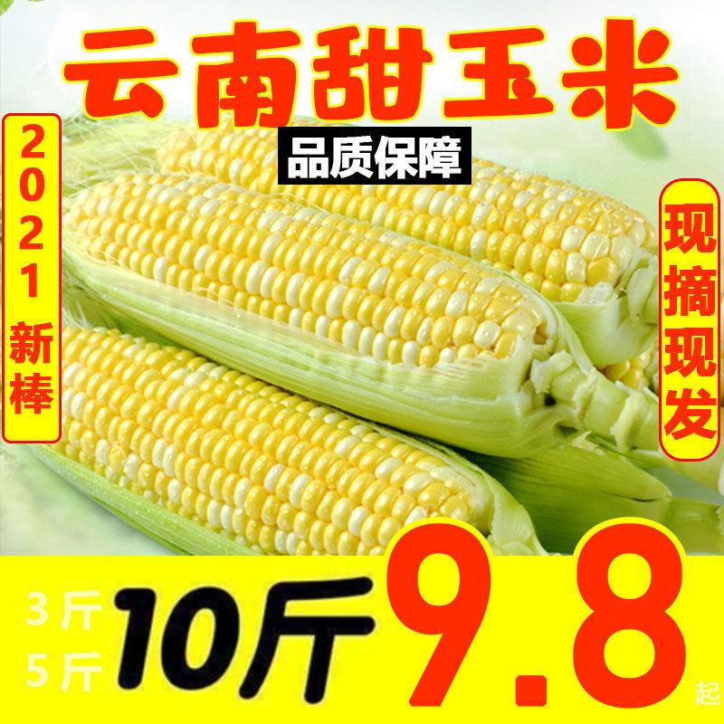 新鲜甜玉米棒云南双色水果玉米新鲜蔬菜嫩玉米当季农家带皮甜玉米
