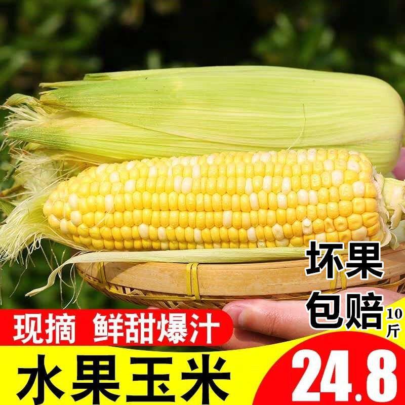新鲜云南玉米水果玉米当季新鲜蔬菜现摘爆浆玉米非糯玉米3/5/10斤