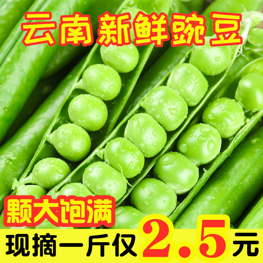 【品质保证】云南豌豆荚新鲜蔬菜带壳青豌豆角/尖荷兰豆批发
