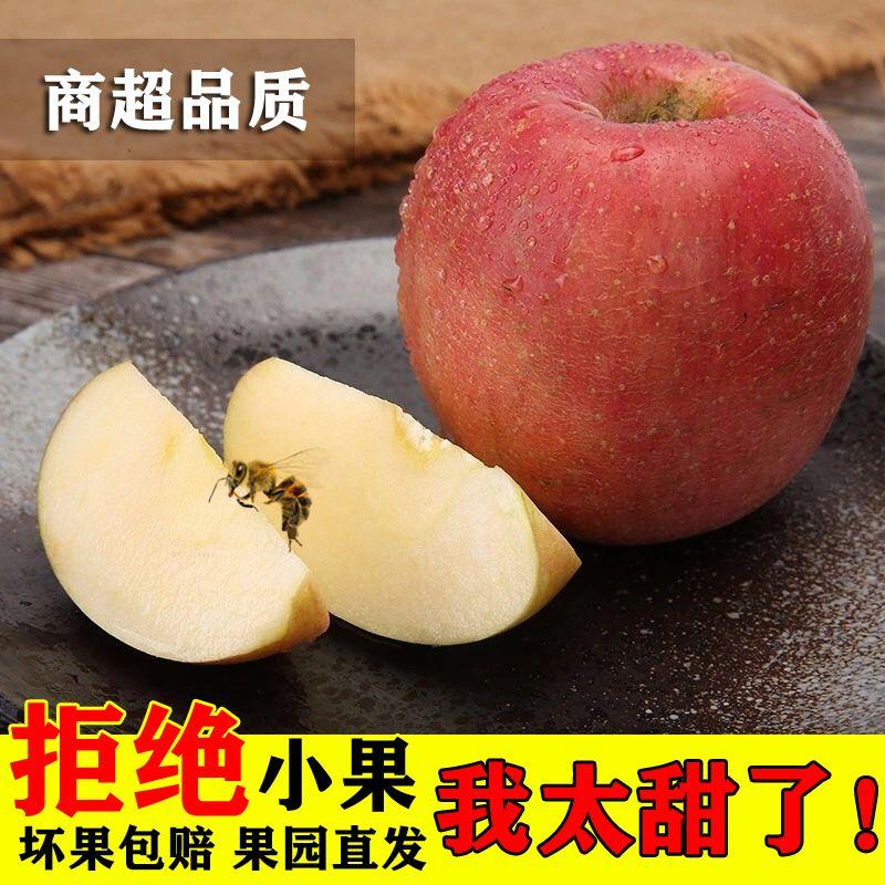 【现摘现发】陕西高原红富士脆甜丑苹果正宗冰糖心当季新鲜水果园