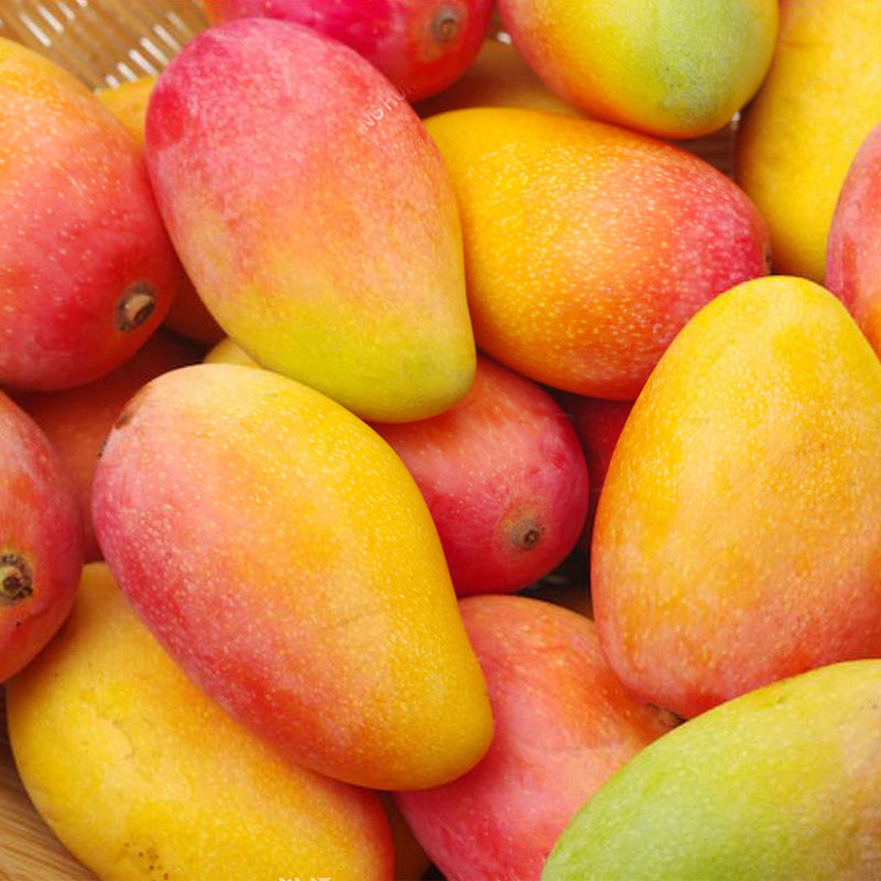 海南贵妃芒果现摘红金龙芒果应季热带新鲜水果一整箱批发非小台农