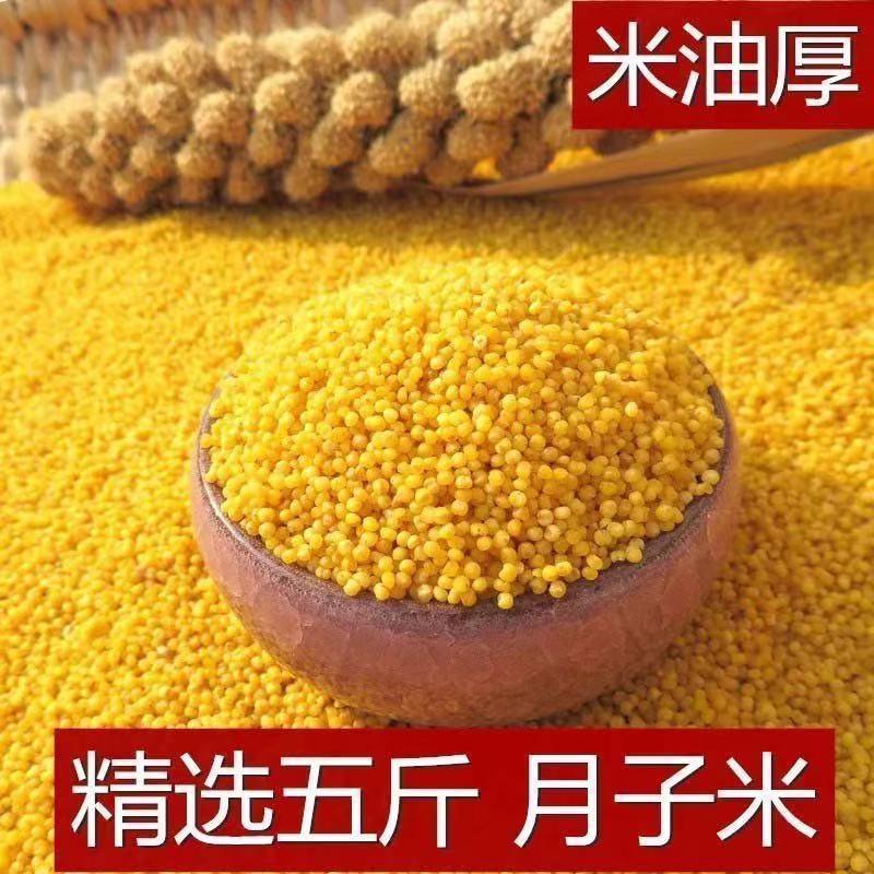 德劲特价山西农家养胃黄小米饭月子米五谷杂粮石磨小米小黄米1斤