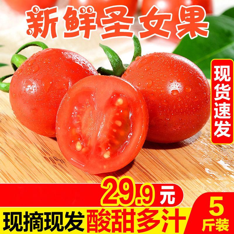 圣女果生吃西红柿福建新鲜樱桃小番茄千水果自然熟禧蕃茄