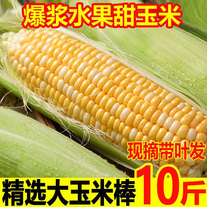 非转基因云南水果玉米现摘新鲜甜脆甜玉米棒爆浆嫩非花糯玉米棒