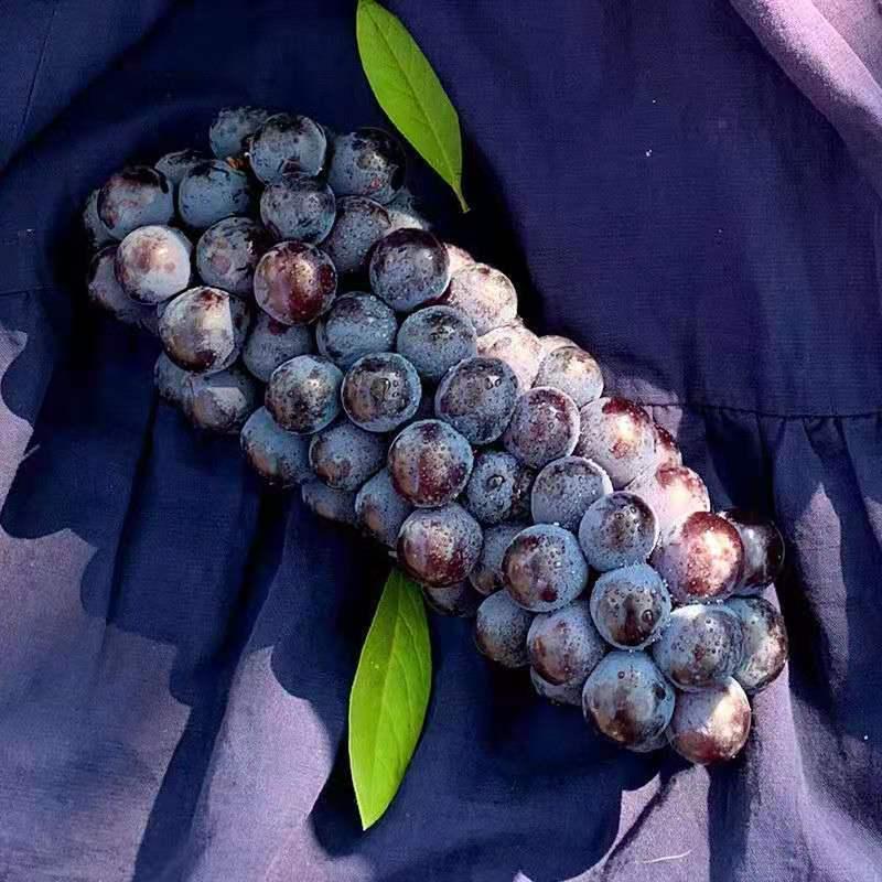 54210-夏黑无籽葡萄新鲜水果当季脆甜低糖黑加仑孕妇儿童黑提子整箱批发-详情图