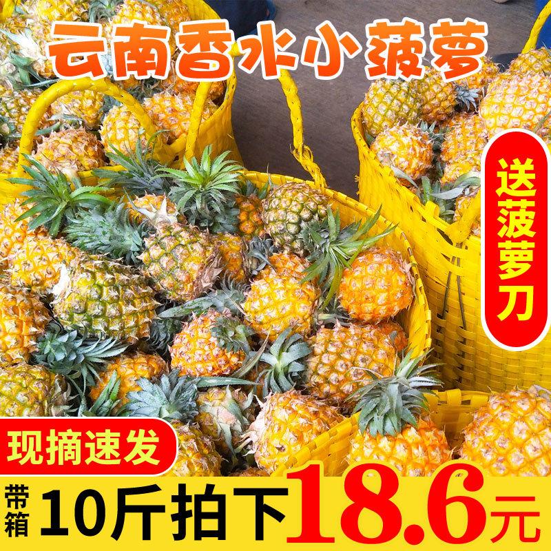 云南香水菠萝小菠萝新鲜应季水果整箱现摘包邮批发3/10斤装非凤梨