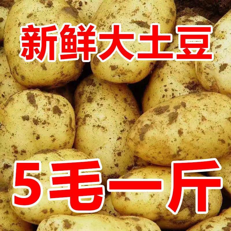 【超低特价】2021山东土豆新鲜现挖马铃薯洋芋黄心土豆批发价包邮