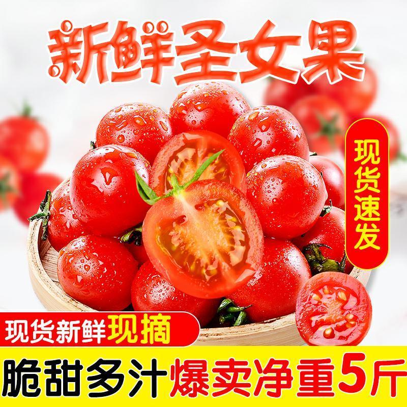 圣女果新鲜水果生吃千禧玲珑小番茄孕妇西红柿自然熟蔬菜包邮