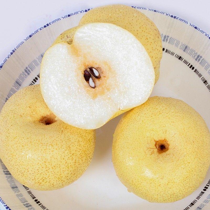 砀山酥梨10/5/2斤 当季新鲜水果 脆甜可口 坏果包赔酥梨