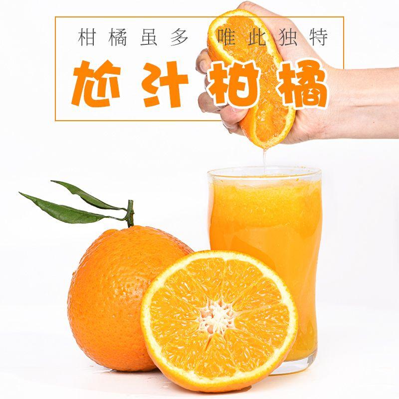 四川蒲江柑橘桔子当季新鲜水果阳光果冻柑橘榨汁专用水果坏果包赔