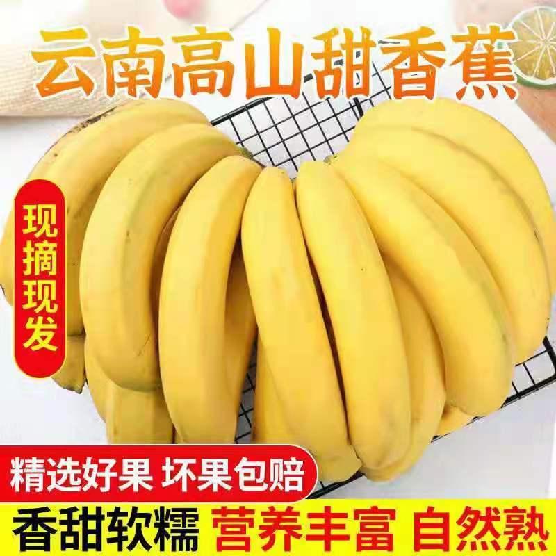 云南高山甜糯香蕉自然熟新鲜当季水果现摘现发5斤/10斤【4月25日发完】