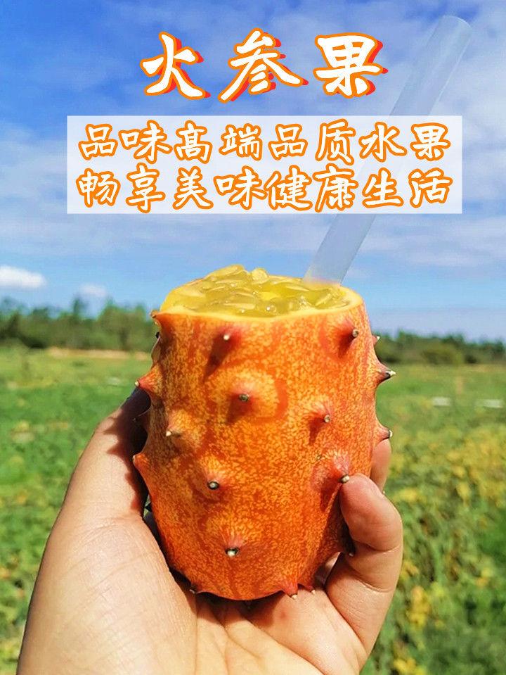 【现摘现发】【火参果】灭霸果刺角瓜非洲恶魔果低糖水果火生果批发【神农良品】