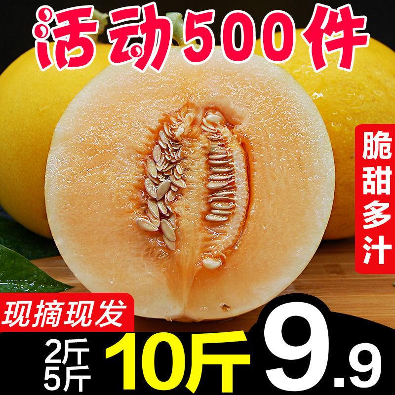 陕西阎良脆甜黄河蜜瓜香瓜应季新鲜孕妇水果2/3/5/10斤批发包邮哈