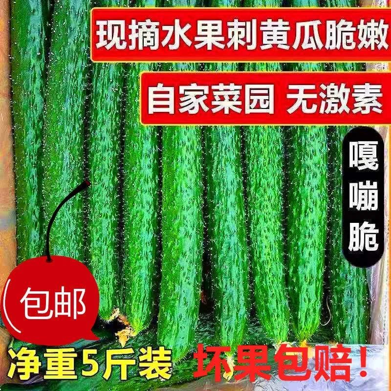 【现摘现发】黄瓜农家自种应季蔬菜青瓜带刺新鲜美味生吃清脆