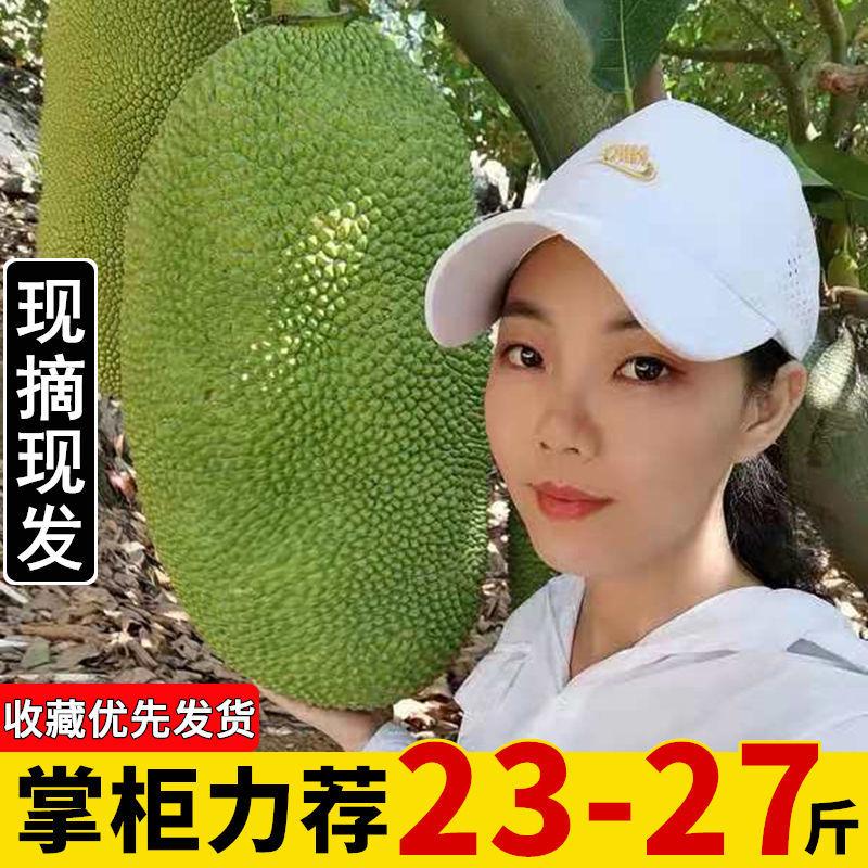 现摘发货海南三亚菠萝蜜新鲜水果当应季一整个黄波罗蜜批发非红肉主图0
