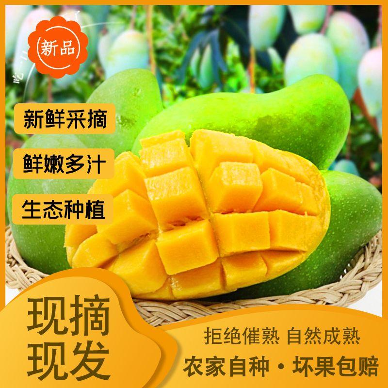【现摘现发】桂七芒果新鲜10斤整箱水果芒果批发青芒果贵妃7号