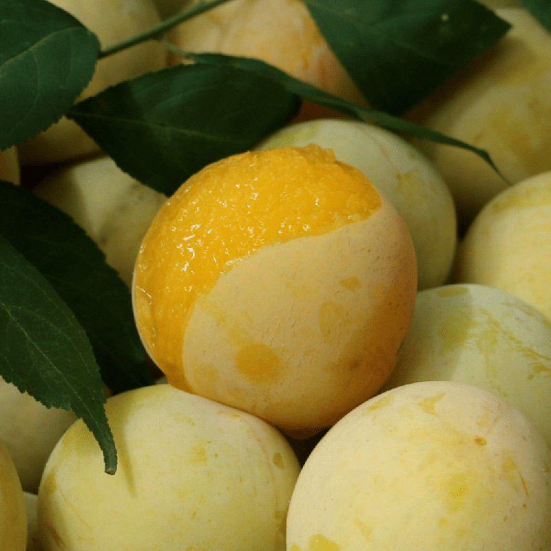 【李中贵族】四川李子超甜汉源特产桃花李冰糖蜂糖李新鲜应季水果