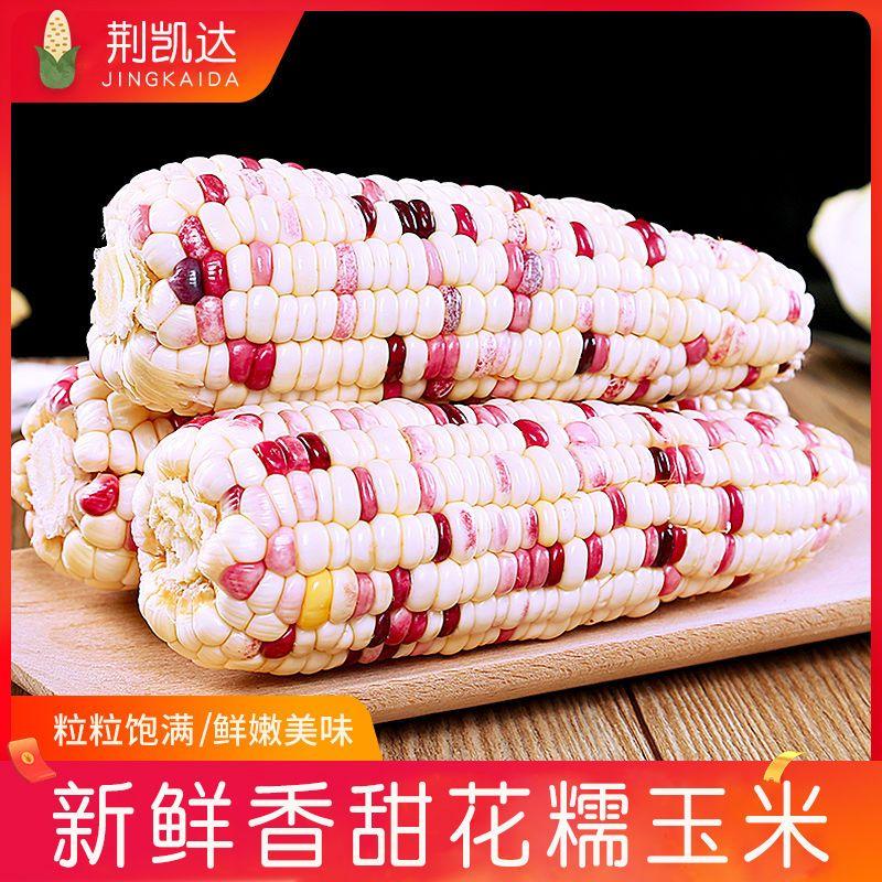 荆凯达花糯玉米新鲜直发带壳甜玉米棒荆州特产花糯玉米早餐玉米棒