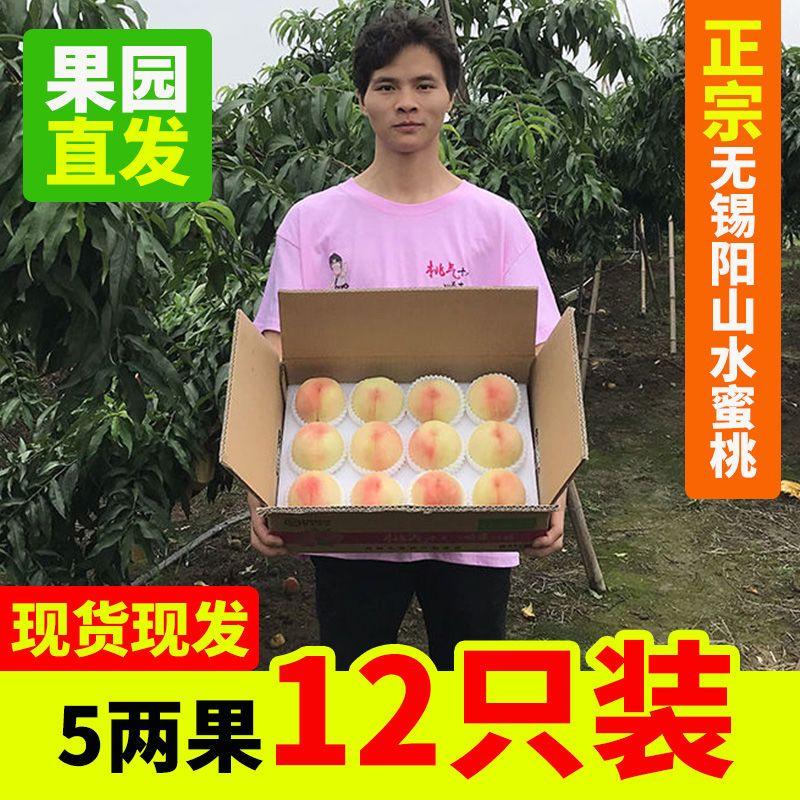 【空运】正宗无锡阳山水蜜桃新鲜水果桃子5/6/7/8两6只特大果包邮