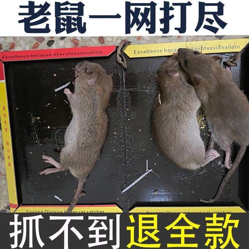 老鼠粘强力粘鼠板胶粘大老鼠一窝端捕老鼠贴克星家用加厚沾鼠神器