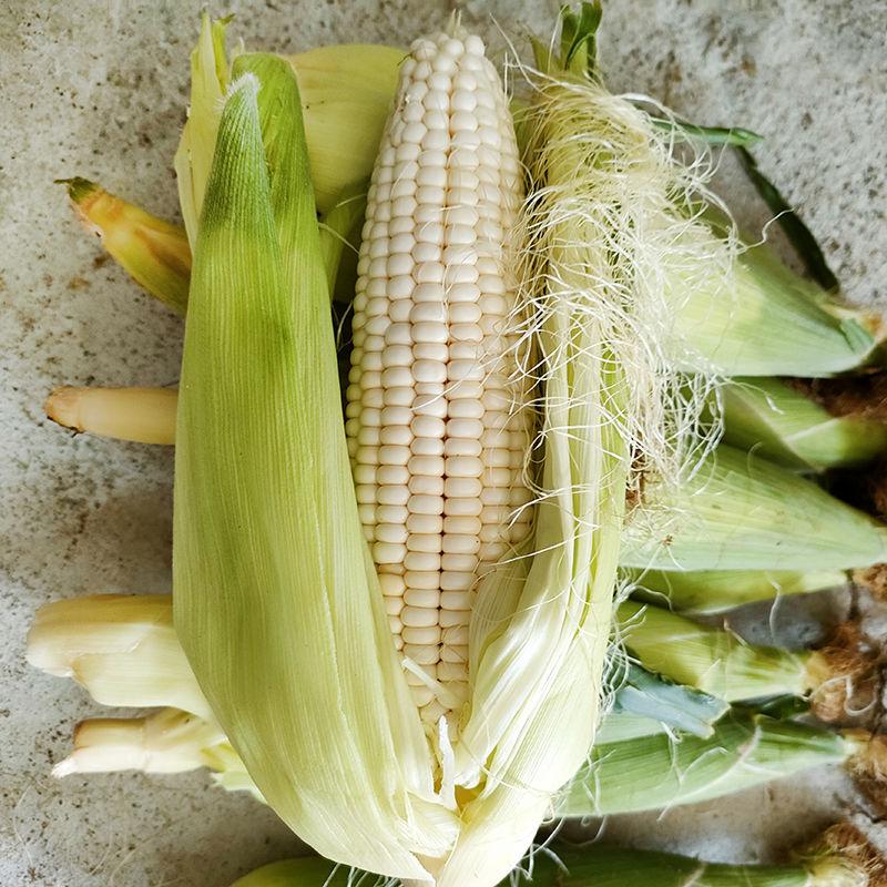 54327-东北现摘新鲜玉米山区带壳苞米香玉米棒白黏粘甜糯包谷非水果包邮-详情图
