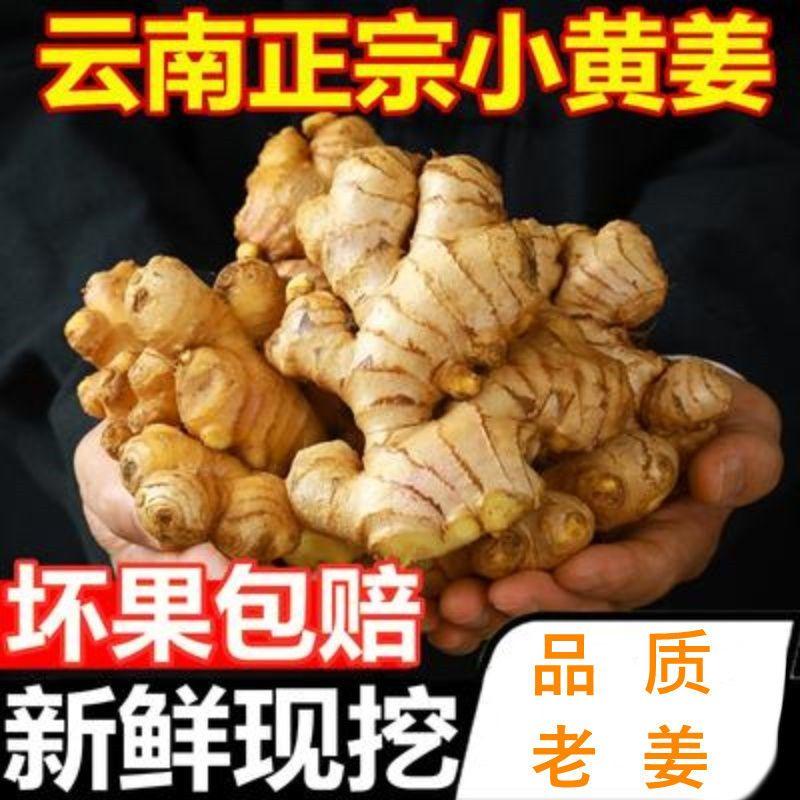 75858-生姜精选云南小黄姜老姜新鲜现挖生姜新姜月子姜老姜新鲜蔬菜嫩姜-详情图
