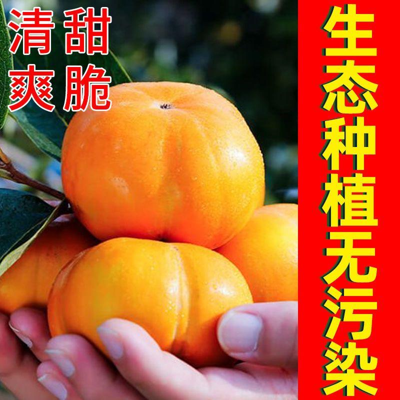 88822-【爆甜】冰糖心脆柿子现摘新鲜水果生吃柿子包邮巧克力甜柿子整箱-详情图