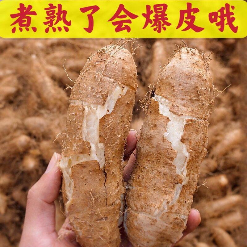 75645-广东毛薯甜薯猪仔薯农家新鲜现挖田薯火苕薯脚板薯粉糯自种山药-详情图