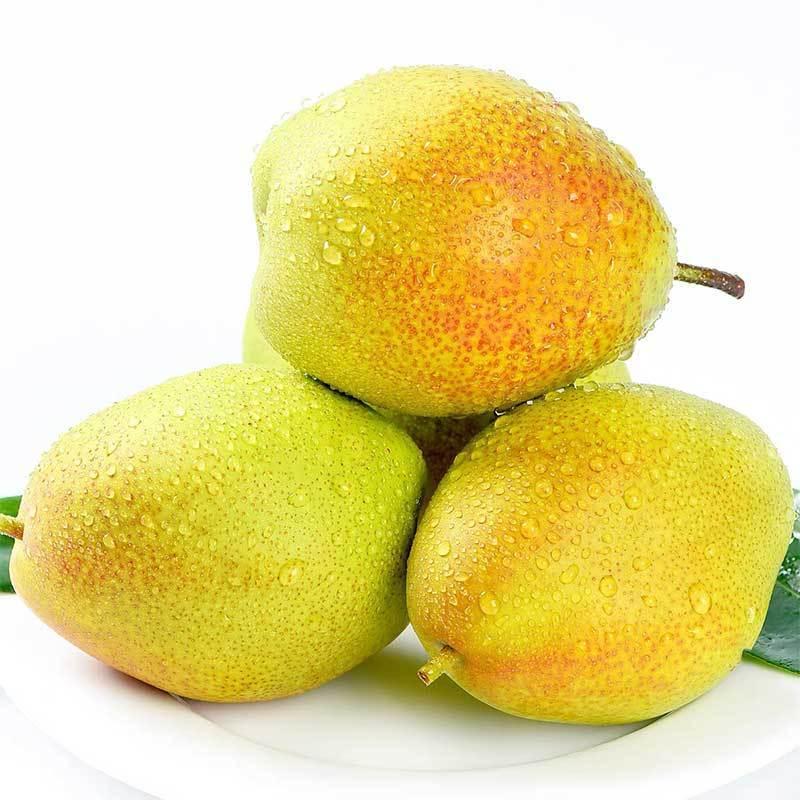 山西香梨水果新鲜应季红香酥梨子特级批发价3/5/10斤现发薄皮梨