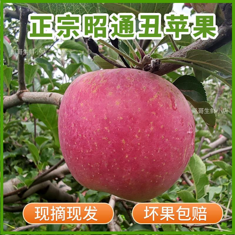 75761-云南昭通丑苹果冰糖心水果野生新鲜脆甜当季整箱红富士野萍果平果-详情图