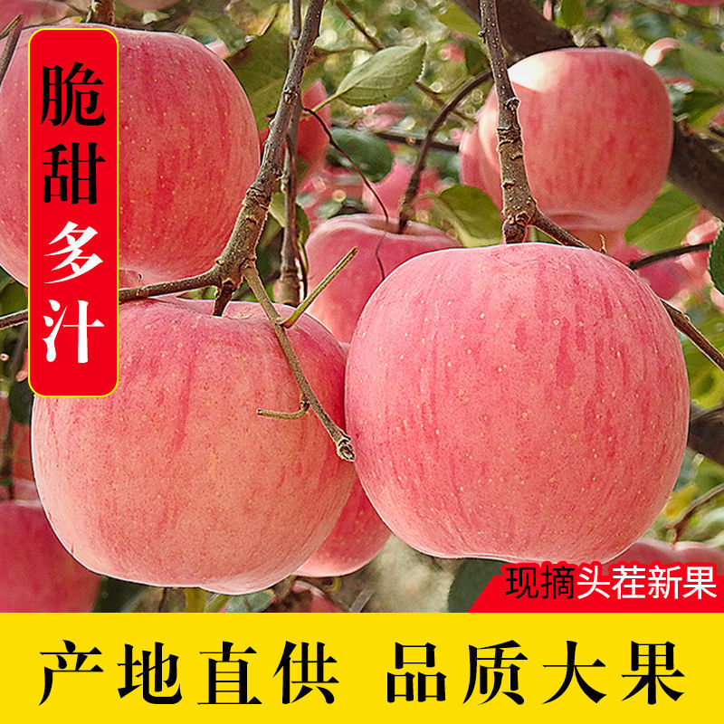 75848-现摘陕西红富士苹果正宗脆甜冰糖心苹果整箱批发当季新鲜水果批发-详情图