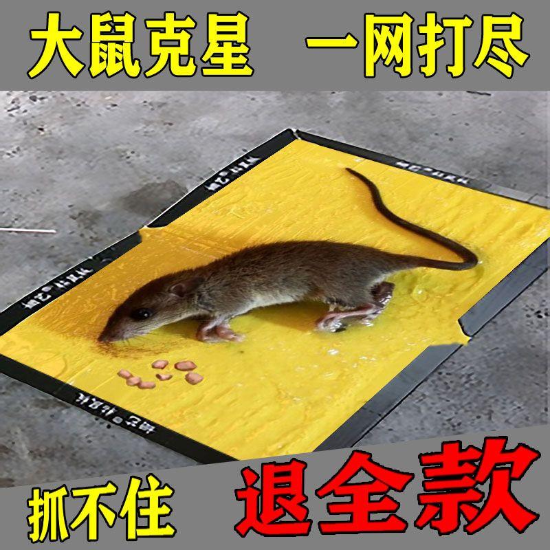 老鼠贴强力灭鼠粘鼠板抓老鼠笼捕鼠夹药胶一窝端家用超强粘贴神器