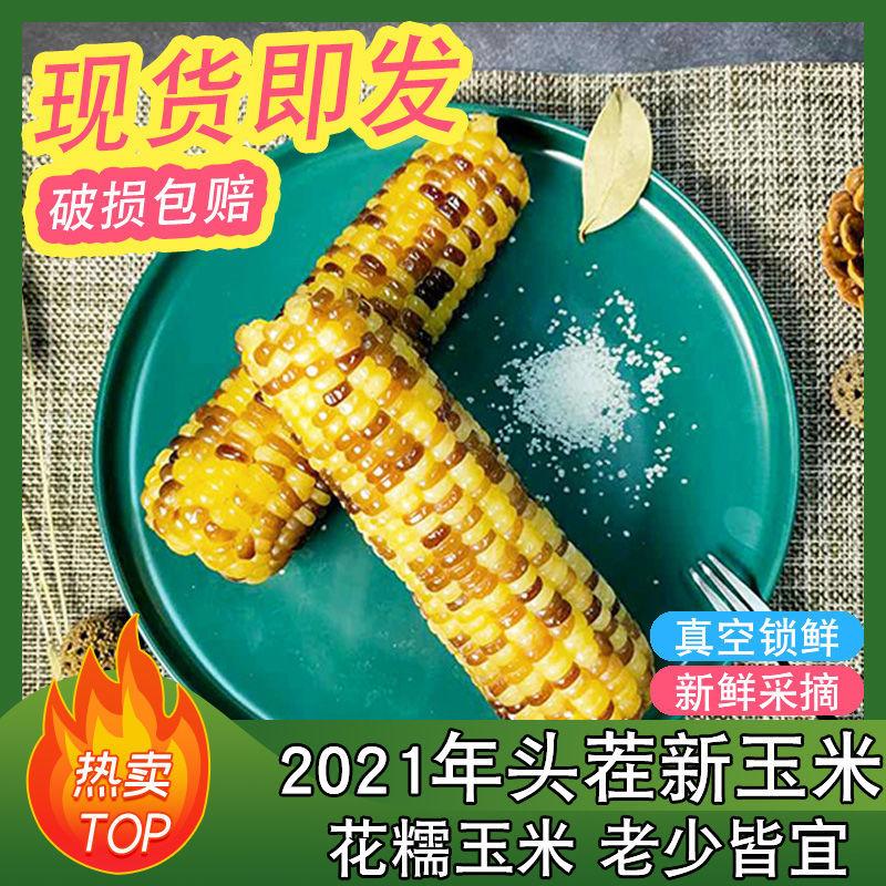 88833-新鲜东北花糯玉米现摘软糯即食甜糯苞米真空包装-详情图