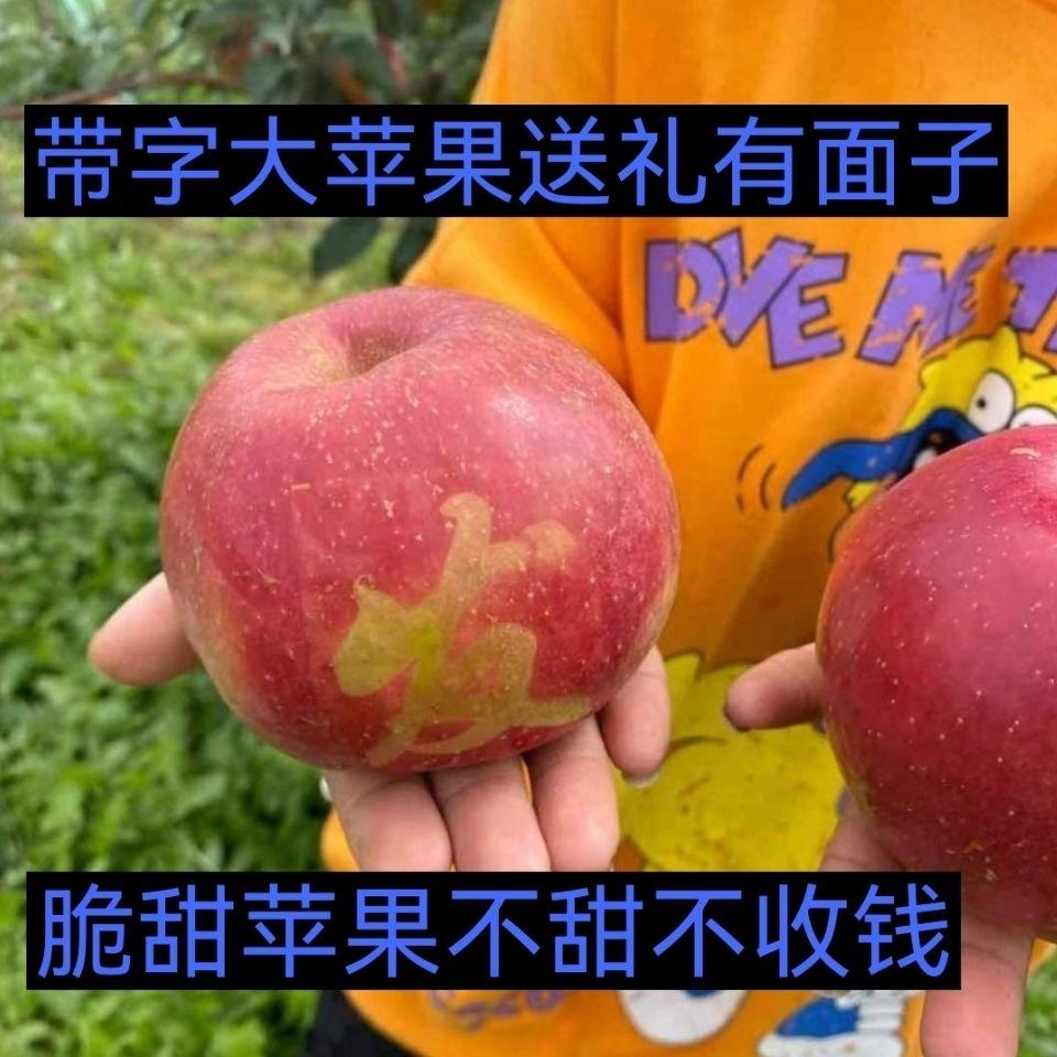 88820-东北寒富甜苹果雪地红果东北水果果园直达现采现发脆甜苹果-详情图